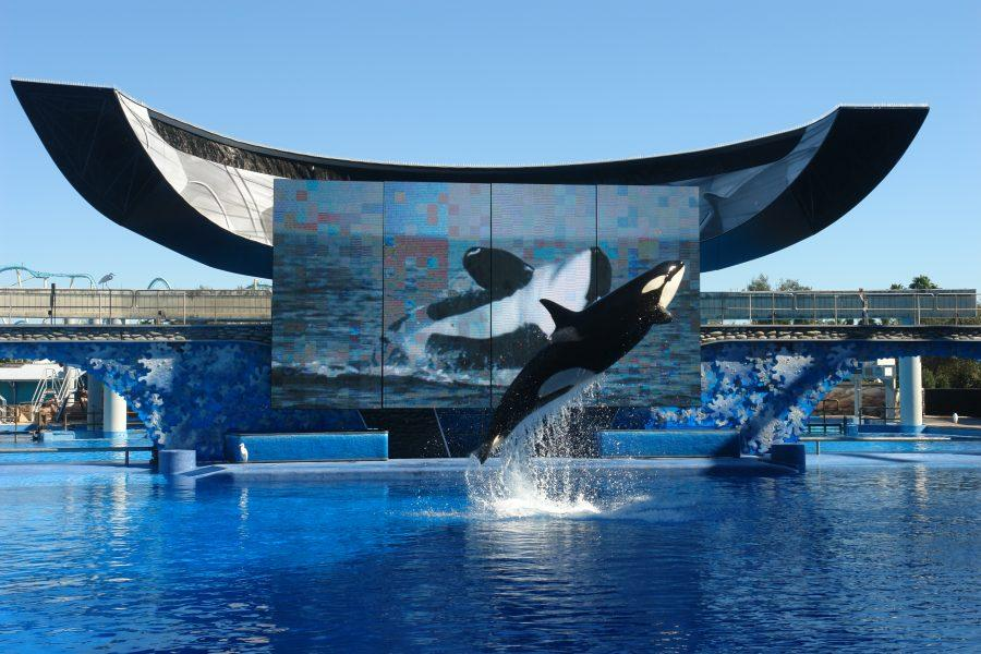 San+Diego+SeaWorld+plans+new+future+for+orcas