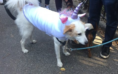 The Tompkins Square Dog Parade is the only Halloween event that truly matters