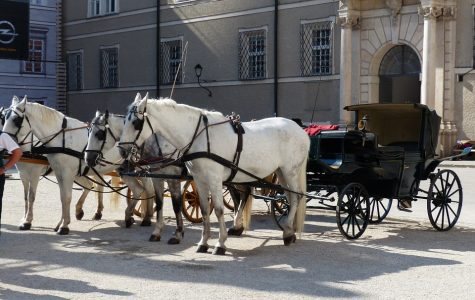 University's Center for Community Action and Research rallies in defense of carriage horses